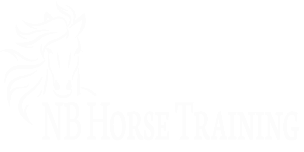 NB Horse Training